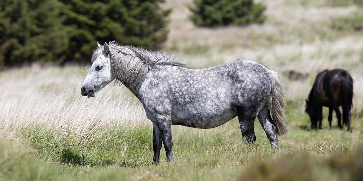 Ponyblog1