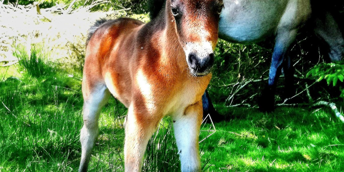 image003 Chinkwell Foals