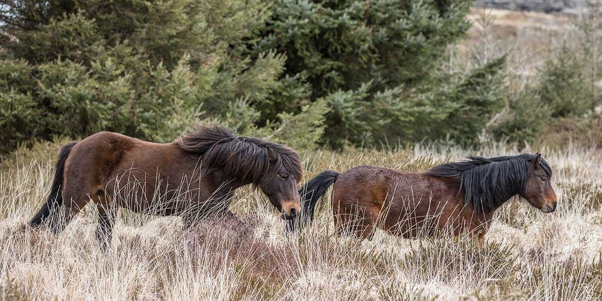 ponieslonggrass
